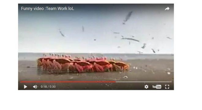equipe video blog