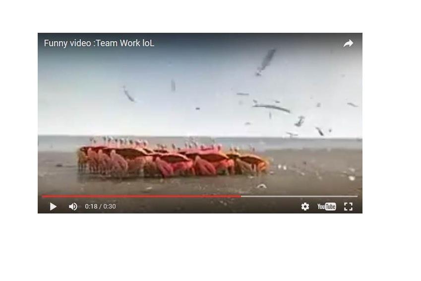 VIDEO TRAVAIL EQUIPE